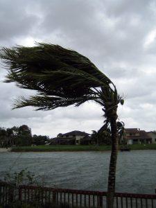 palm-tree-1406738-225x300